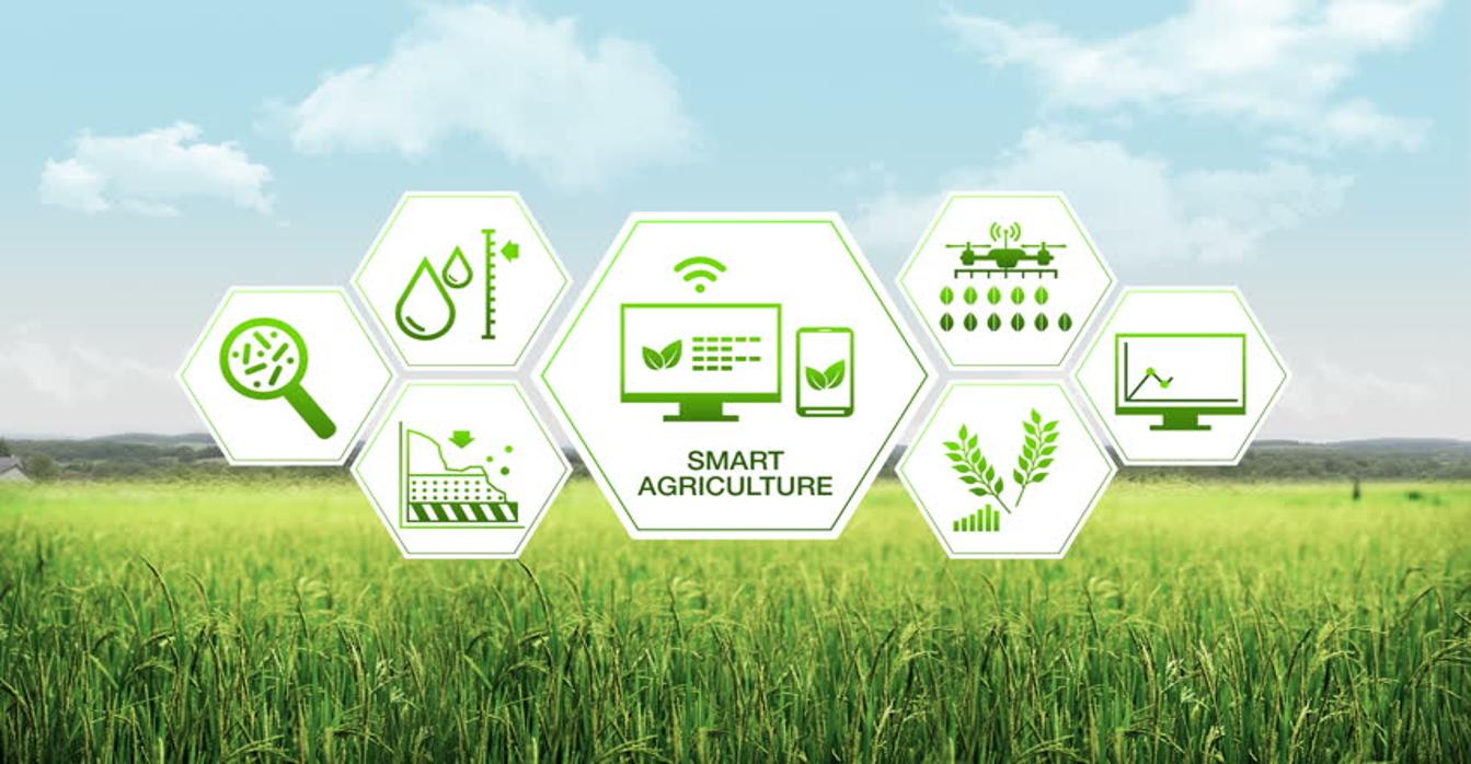 The Smart Farm